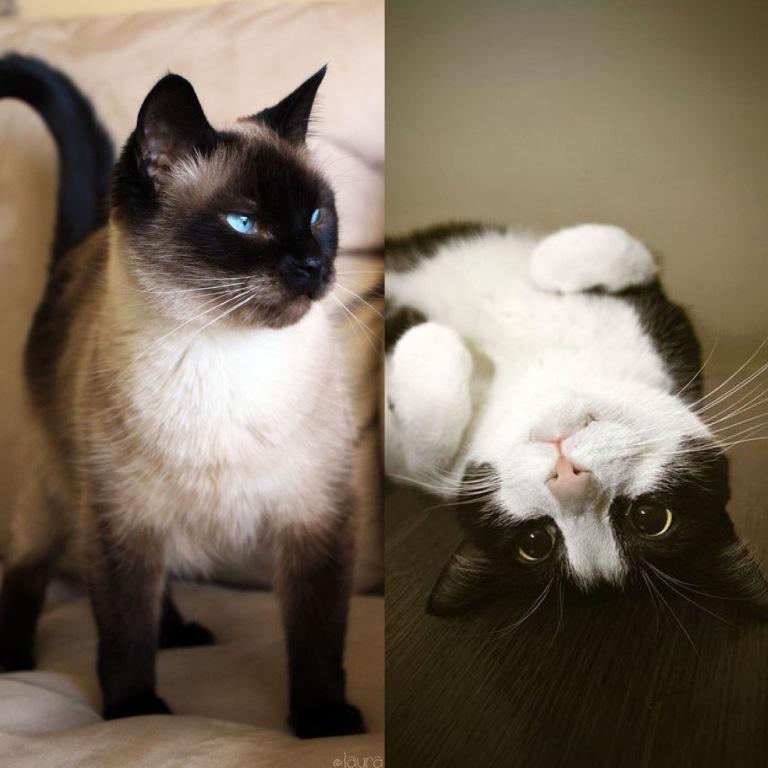 Lexi & Oreo...#kittylove